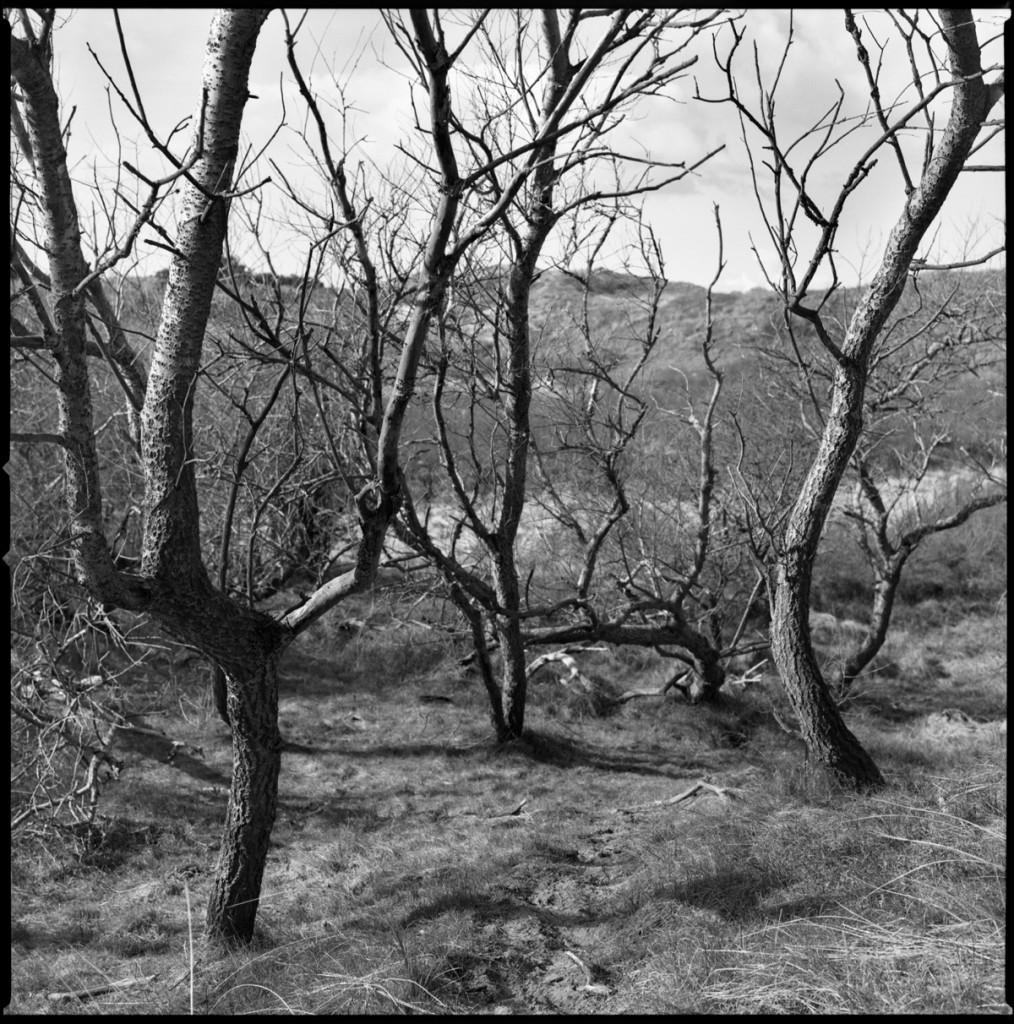 Trees, Egmond