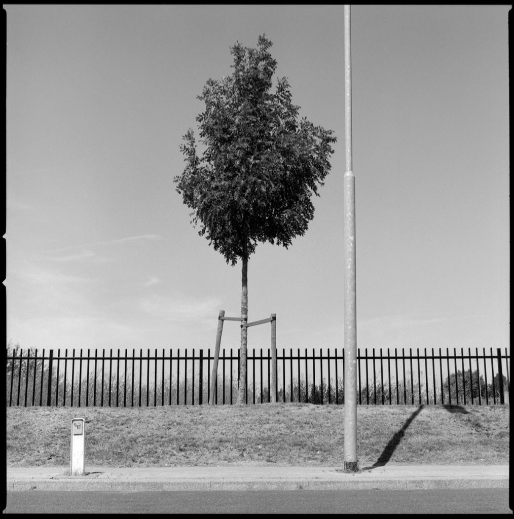 lamp post+fence+tree