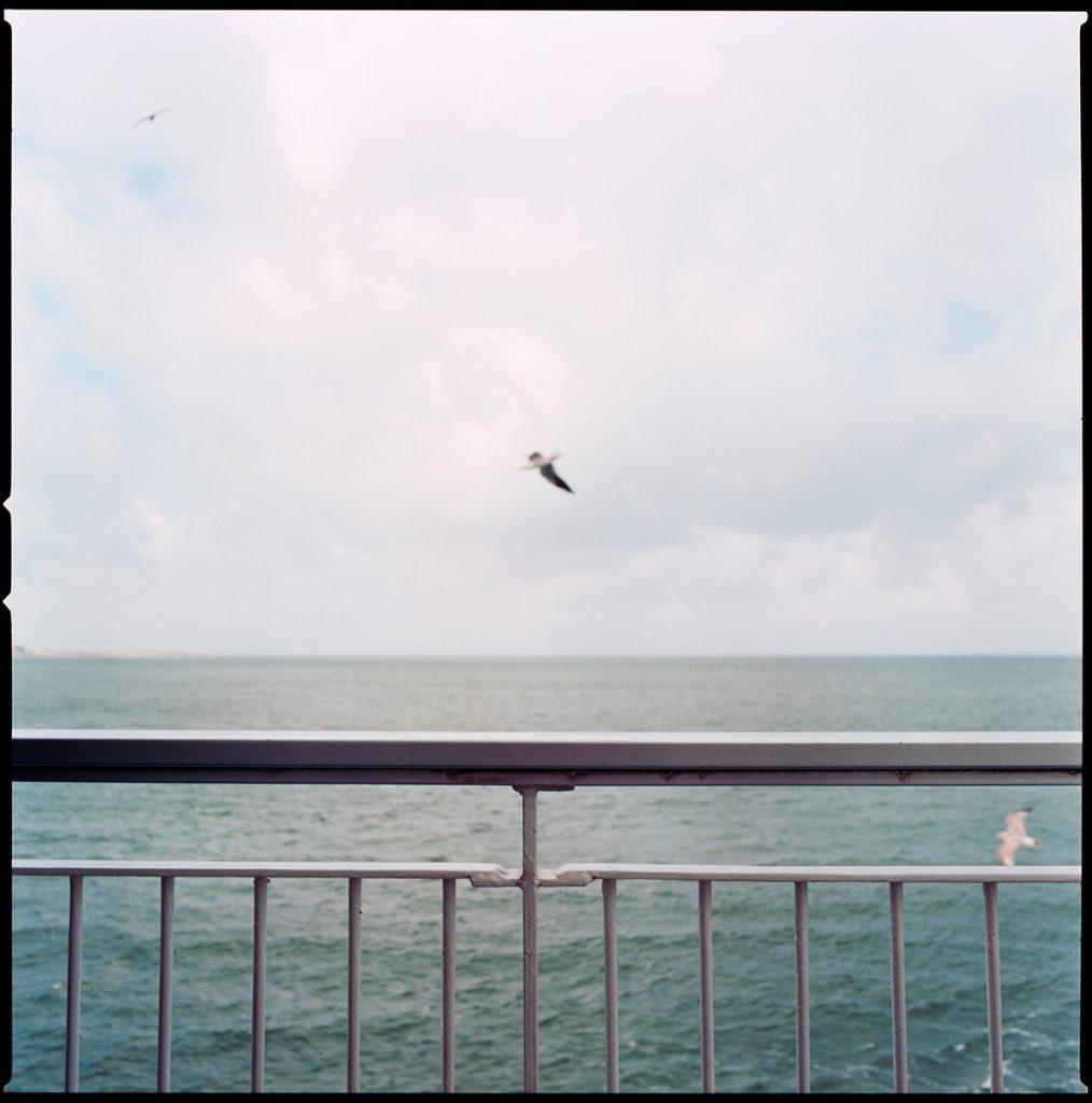 schulpengat-ferry-seagulls