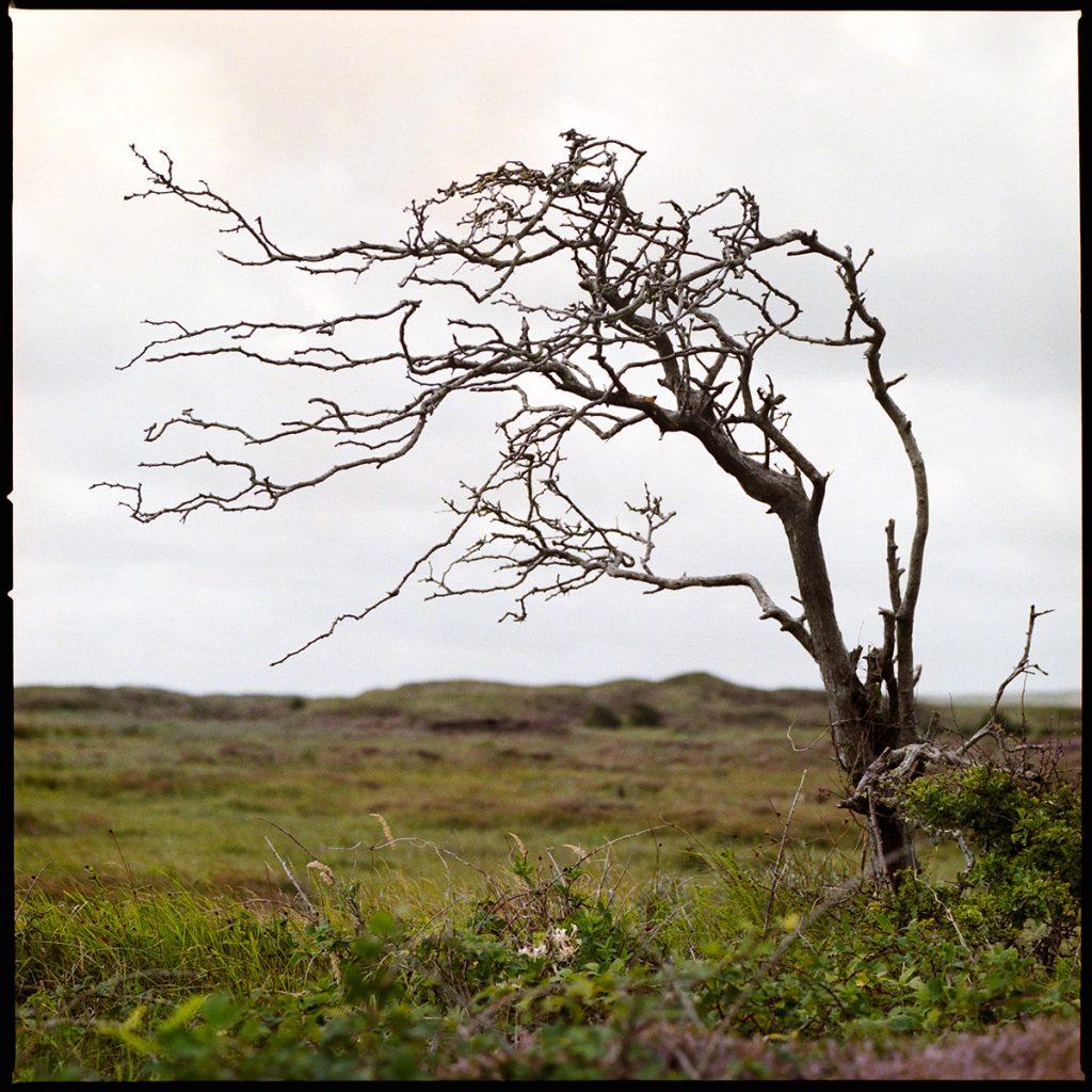 Bollekamer bent tree