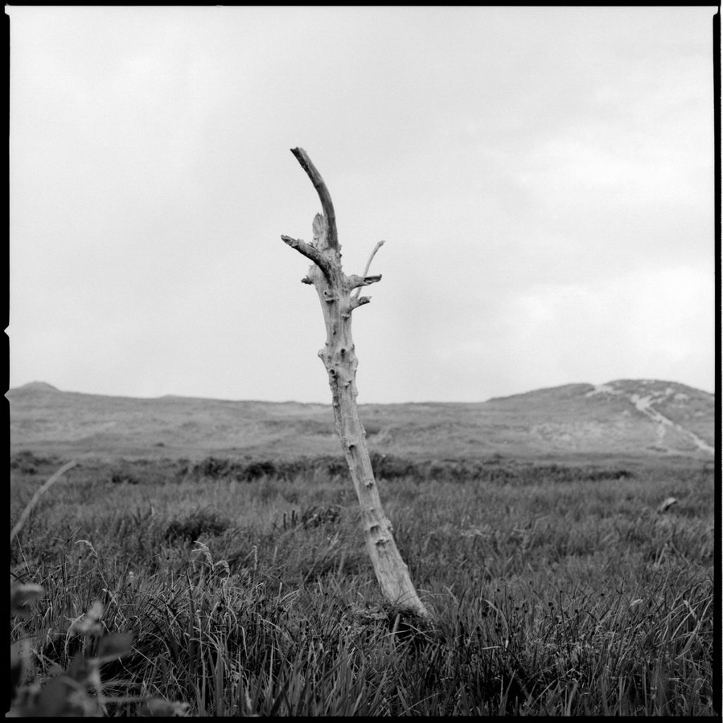 Bollekamer tree stub