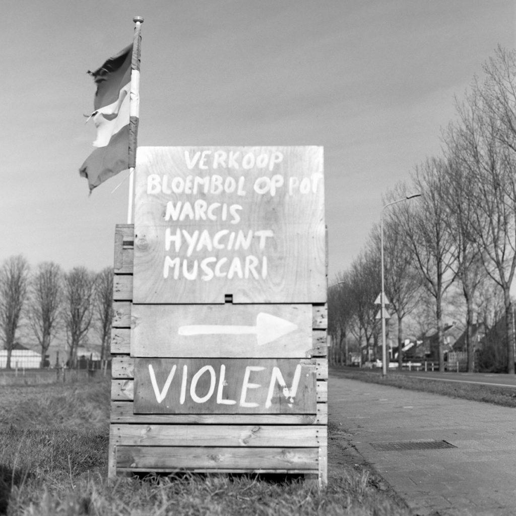 violen sign